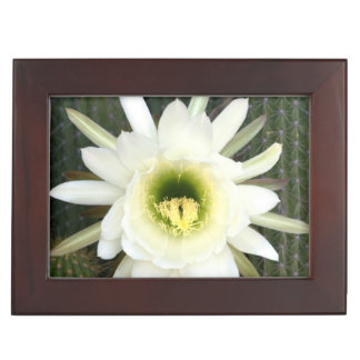 Queen Of The Night Cactus Flower, Karoo Region Keepsake Box