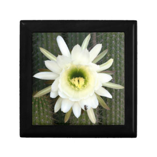 Queen Of The Night Cactus Flower, Karoo Region Small Square Gift Box