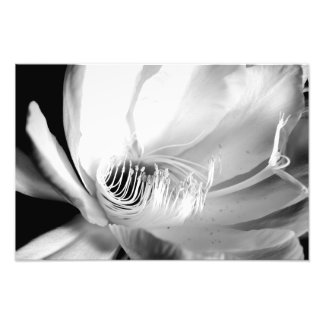Queen of the Night close-up in Black and White Photo Art
