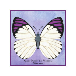Queen Purple Tip Butterfly Canvas Print