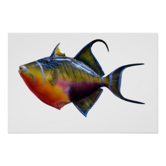 Queen Trigger Fish Poster