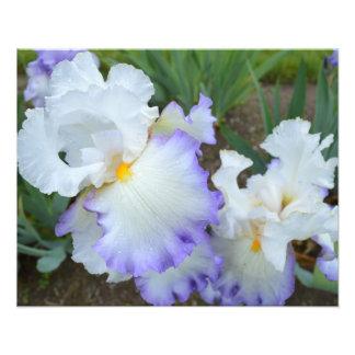"""Queen's Circle Iris 20""""x16"""" Photo Print"""