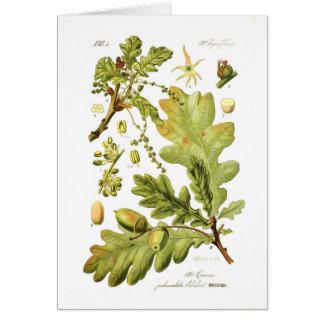 Quercus pedunculata (English Oak) Card