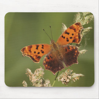 Question Mark butterfly, Polygonia Mouse Mat