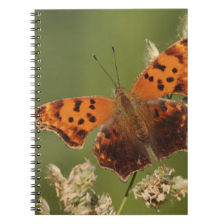 Question Mark butterfly, Polygonia Notebook