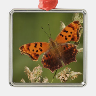 Question Mark butterfly, Polygonia Silver-Colored Square Decoration