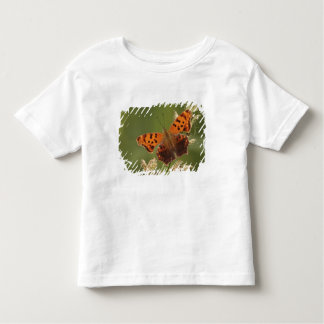 Question Mark butterfly, Polygonia Toddler T-Shirt