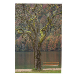 Quiet bench along a lake, Germany Wood Prints