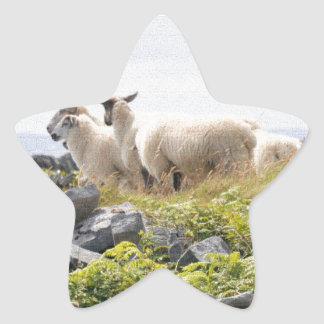 Quirky Designs - Sheep in a field Star Sticker