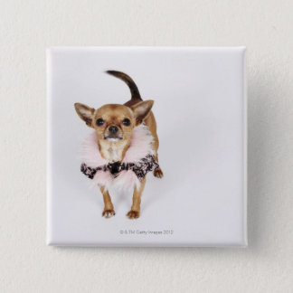 Quirky portrait of a Teacup Chihuahua 15 Cm Square Badge