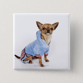 Quirky portrait of a Teacup Chihuahua 2 15 Cm Square Badge