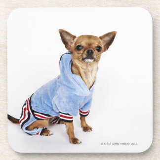 Quirky portrait of a Teacup Chihuahua 2 Coaster