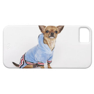 Quirky portrait of a Teacup Chihuahua Barely There iPhone 5 Case