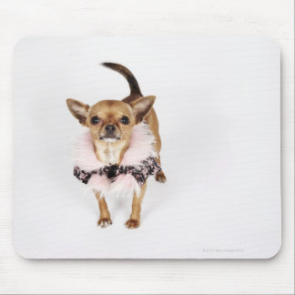 Quirky portrait of a Teacup Chihuahua Mouse Pad