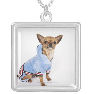 Quirky portrait of a Teacup Chihuahua Silver Plated Necklace