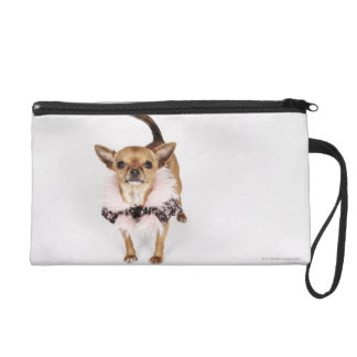 Quirky portrait of a Teacup Chihuahua Wristlet