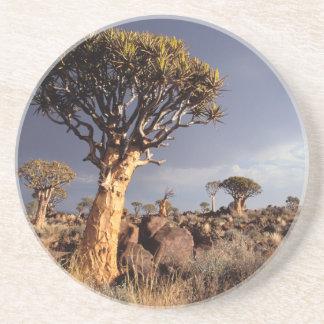 Quiver Trees (Aloe Dichotoma) Coaster