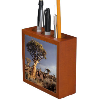 Quiver Trees (Aloe Dichotoma) Desk Organiser