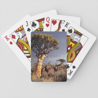 Quiver Trees (Aloe Dichotoma) Playing Cards