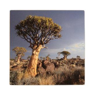 Quiver Trees (Aloe Dichotoma) Wood Coaster