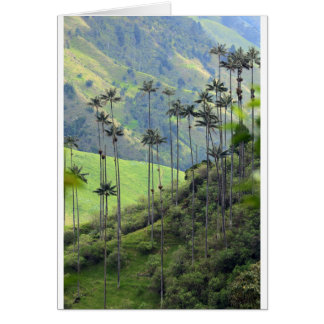 Qunidio wax palms in Cocora Valley Greeting Card