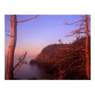 Quoddy Head State Park Maine Ocean Bluffs Postcard