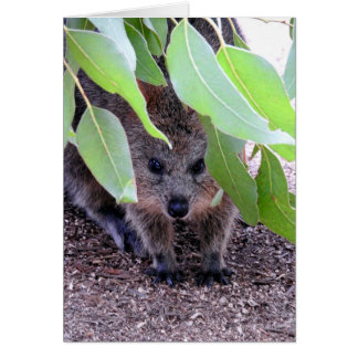 Quokka Greeting Card