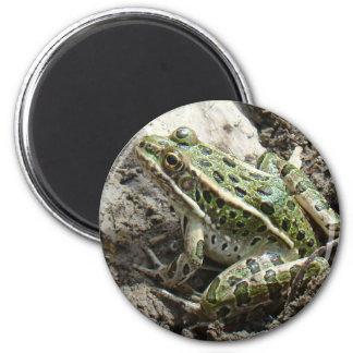 R0003 Leopard Frog 6 Cm Round Magnet