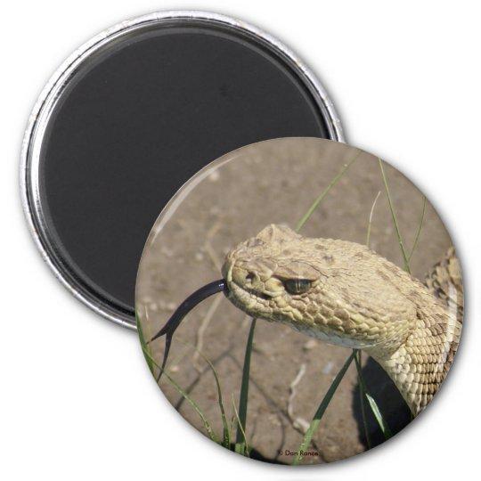 R0008 Prairie Rattlesnake 6 Cm Round Magnet