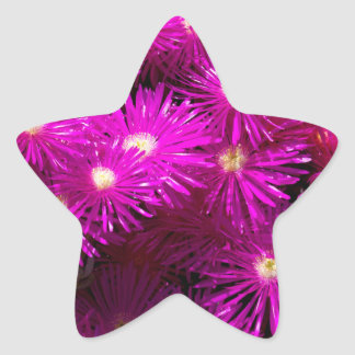 raani flowers star sticker