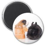 rabbit and guinea pig aimant pour réfrigérateur