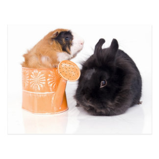 rabbit and guinea pig postcard