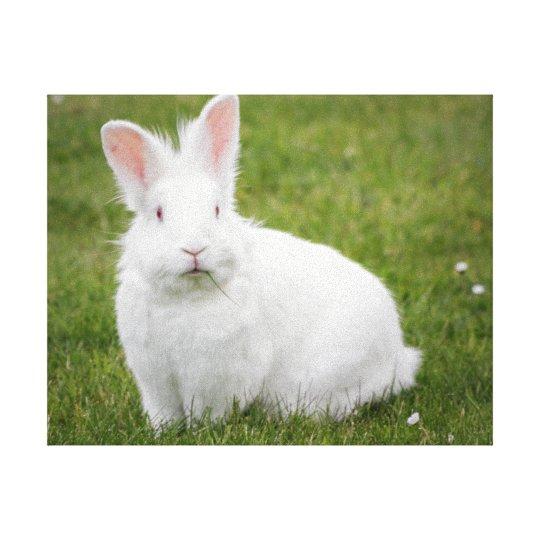 rabbit bunny photograph canvas print