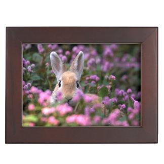 Rabbit farm keepsake box