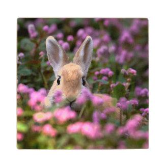Rabbit farm wood coaster
