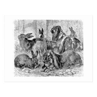 Rabbit Friends Postcard