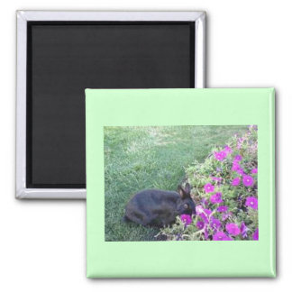 Rabbit in the garden square magnet