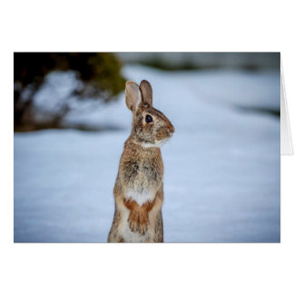 Rabbit in the snow card