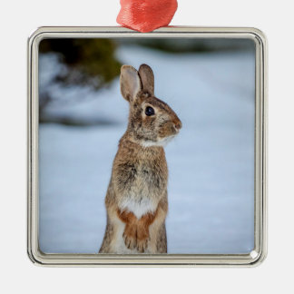 Rabbit in the snow christmas ornament