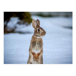 Rabbit in the snow postcard