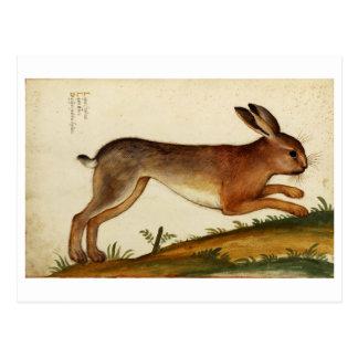 Rabbit Italiano Postcard