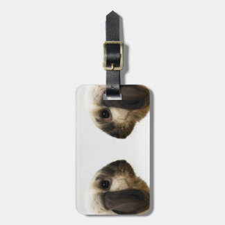 Rabbit looking at rabbit luggage tag