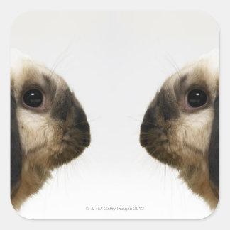 Rabbit looking at rabbit square sticker