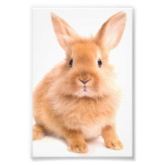 Rabbit Photo Print