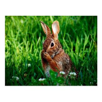Rabbit Post Card