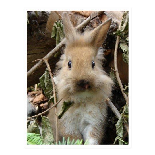 Rabbit, rabbit postcard