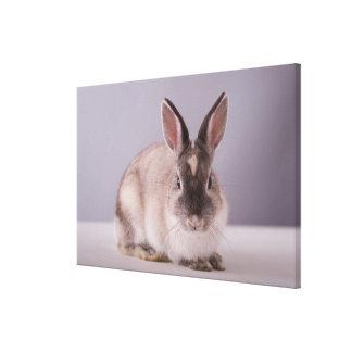 rabbit,simple background,animal,white table, canvas print