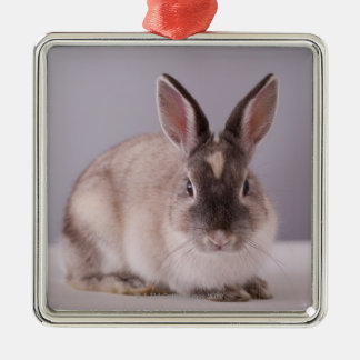 rabbit,simple background,animal,white table, christmas ornament