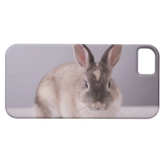 rabbit,simple background,animal,white table, iPhone 5 cover