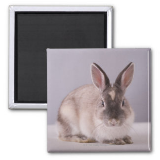 rabbit,simple background,animal,white table, magnet